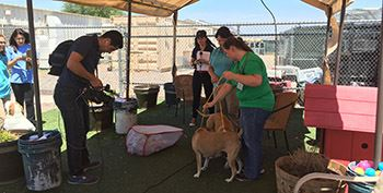 """Clear the Shelters"" Pet Adoption Drive on Aug. 19"
